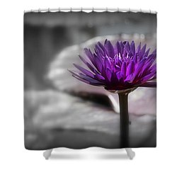 Purple Pond Lily Shower Curtain by Lynn Sprowl