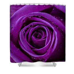 Purple Rose Close Up Shower Curtain by Garry Gay