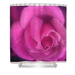 Purple Rose Confection Shower Curtain