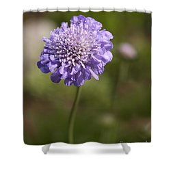 Purple Scabious Columbaria Shower Curtain