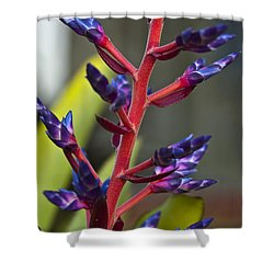 Purple Spike Bromeliad Shower Curtain by Sharon Cummings