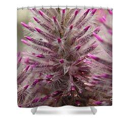 Purple Spike Shower Curtain by Kenny Glotfelty