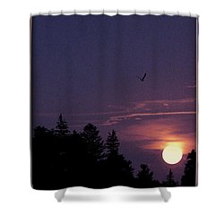 Shower Curtain featuring the photograph Purple Sunset With Sea Gull by Peter v Quenter