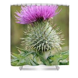 Purple Thistle Shower Curtain by Jeremy Voisey