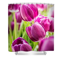 Purple Tulip Garden Shower Curtain