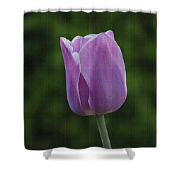 Purple Tulip Shower Curtain by Sandy Keeton