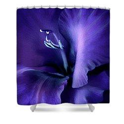 Purple Velvet Gladiolus Flower Shower Curtain by Jennie Marie Schell