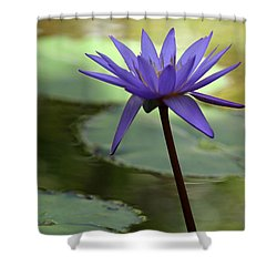 Purple Water Lily In The Shade Shower Curtain by Sabrina L Ryan