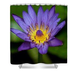 Purple Water Lily Shower Curtain by Pamela Walton
