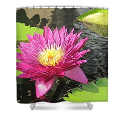 Purple Water Lily Shower Curtain by Richard Reeve