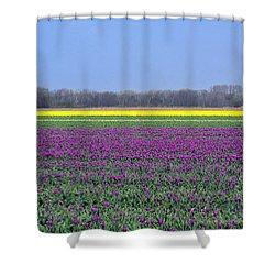 Purple With Golden Lining. Fields Of Tulips Series Shower Curtain by Ausra Huntington nee Paulauskaite
