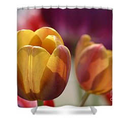 Purpleyellowtulips7016 Shower Curtain by Gary Gingrich Galleries