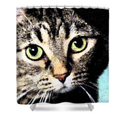 Shower Curtain featuring the photograph Purrfectly Bright Eyed by Nina Silver