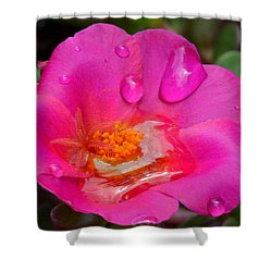 Purslane Flower In The Rain Shower Curtain by Sandi OReilly