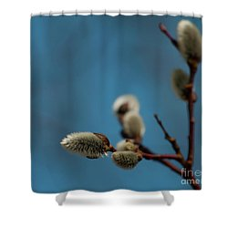 Pussy Willow... Shower Curtain