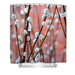 Pussy Willows Shower Curtain by Ira Shander
