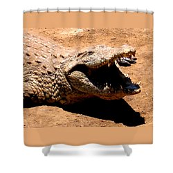 Put It Right Here Shower Curtain by Jay Milo