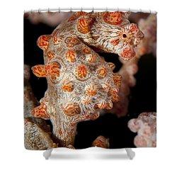 Pygmy Seahorse On Sea Fan, Lembeh Shower Curtain by Steve Jones