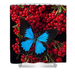 Pyracantha And Butterfly Shower Curtain by Garry Gay