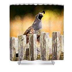 Quail Lookout Shower Curtain