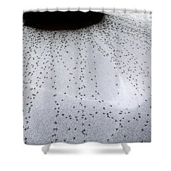 Quail Tracks Shower Curtain by Will Borden