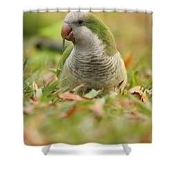 Quaker Parrot #3 Shower Curtain
