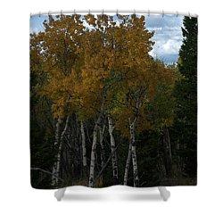 Quaking Aspen Shower Curtain