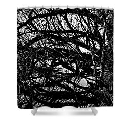 Shower Curtain featuring the digital art Quantum Entanglement 1 by Chriss Pagani