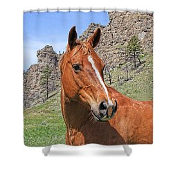 Quarter Horse Portrait Montana Shower Curtain by Jennie Marie Schell