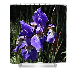 Quebec Provincial Flower Shower Curtain by Barbara McMahon