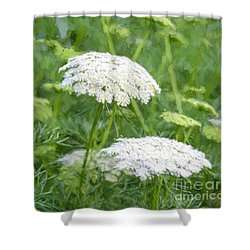 Queen Anne's Lace Impressions Shower Curtain by Sharon Seaward