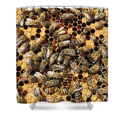 Queen Bee And Her Attendants Shower Curtain