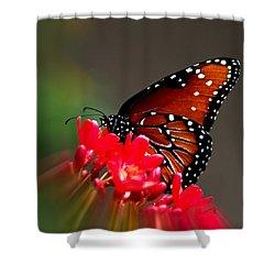 Queen Butterfly II Shower Curtain
