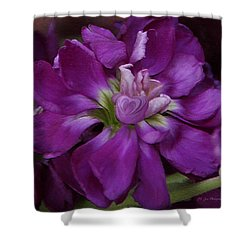 Queen Of Hearts Shower Curtain by Jeanette C Landstrom