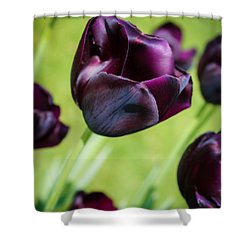 Shower Curtain featuring the photograph Queen Of The Night Black Tulips by Peta Thames