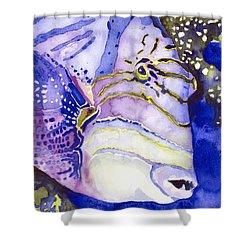 Queen Triggerfish Portrait Shower Curtain