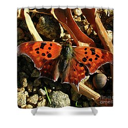 Shower Curtain featuring the photograph Question Mark Butterfly by Donna Brown