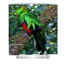 Quetzal Shower Curtain