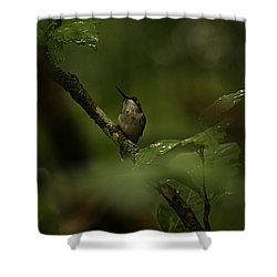 Quietly Waiting Shower Curtain by Tammy Schneider