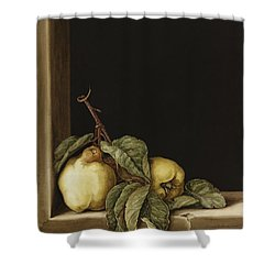 Quinces Shower Curtain by Jenny Barron