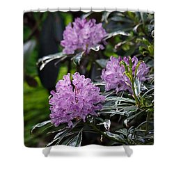 Shower Curtain featuring the photograph R. Ponticum Variegatum by Chris Anderson