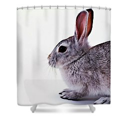 Rabbit 1 Shower Curtain by Lanjee Chee