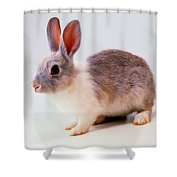 Rabbit 2 Shower Curtain by Lanjee Chee