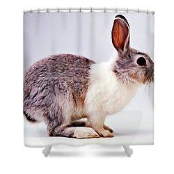 Rabbit  3 Shower Curtain by Lanjee Chee