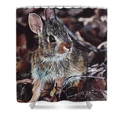 Rabbit In The Woods Shower Curtain by Joshua Martin