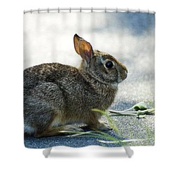 Shower Curtain featuring the photograph Rabbit by Yulia Kazansky