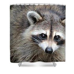 Raccoon Eyes Shower Curtain by Carol Groenen