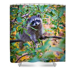 Raccoon Shower Curtain by Inge Johnsson