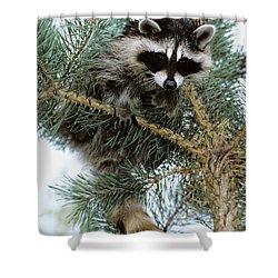 Raccoon Shower Curtain