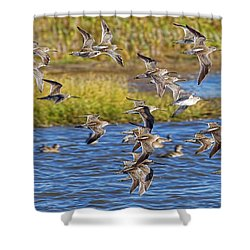 Shower Curtain featuring the photograph Racing Stripes by Gary Holmes